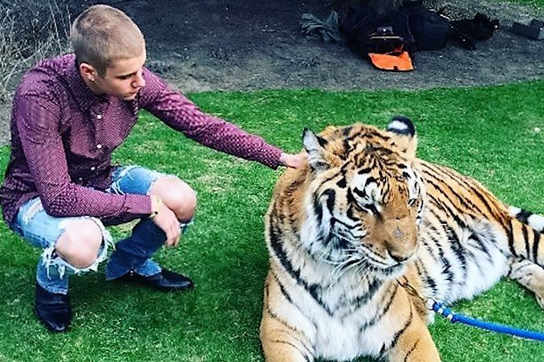 Justin Bieber caused his fans enough distress when he cut his hair off - but now he's angered animal rights people too. He thought it fun to bring along a trained tiger to his dad Jeremy's engagement party in Toronto, but instead the well intentioned stunt has plenty growling about what a beast he is.