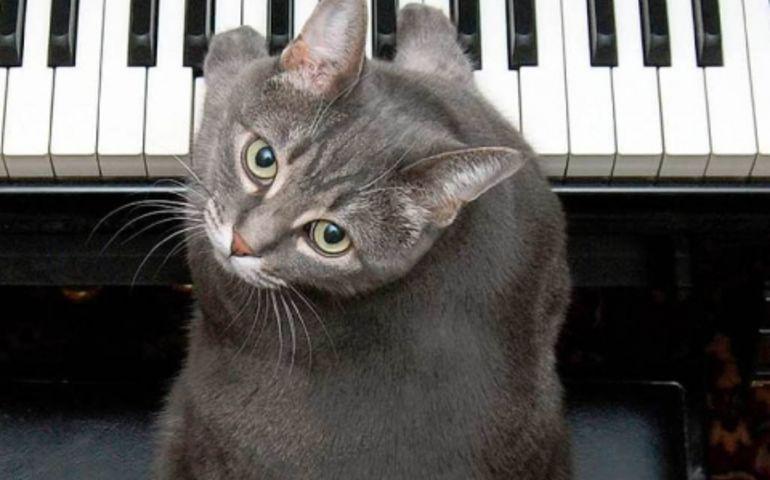 Nora 'the piano cat'