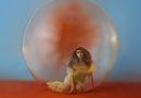Alessia Cara  album graphic
