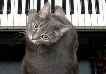 Nora 'the piano cat'