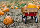 Pumpkin patch image - YNC